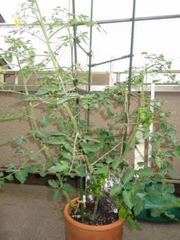 プランター菜園0002.JPG